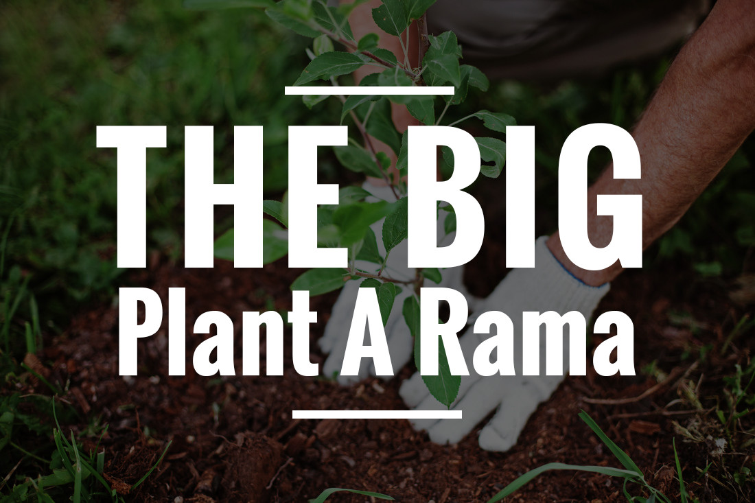 The Big Plant A Rama